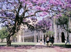 UQ image, 2004, Great Court, Jacarandas, , sandstone, 2548-045